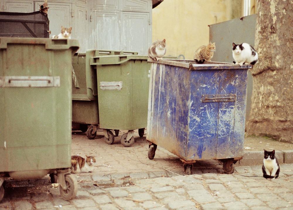 street-cat-society-i-ffb70378-d2a2-467f-9f81-eca271df90d2