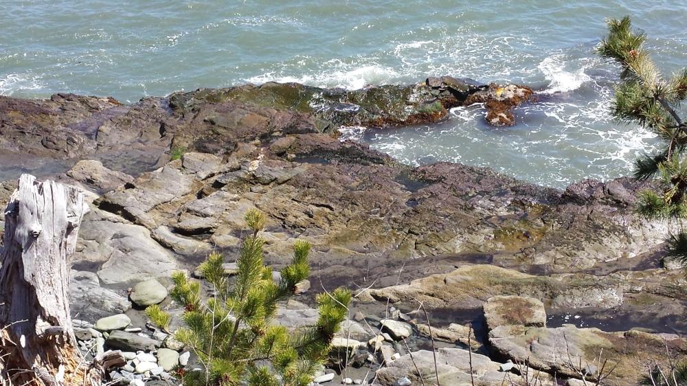 scenery from the cliff walk in newport, RI
